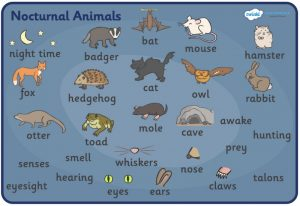 Nocturnal Animals For Kids Video Clips