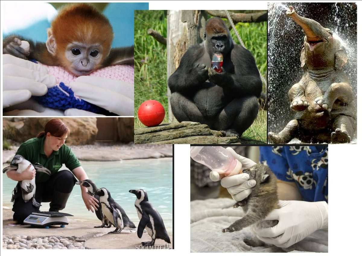 an argument against keeping animals in zoos How can the answer be improved.