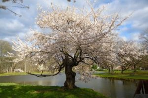 new_jersey_spring_nature_215447